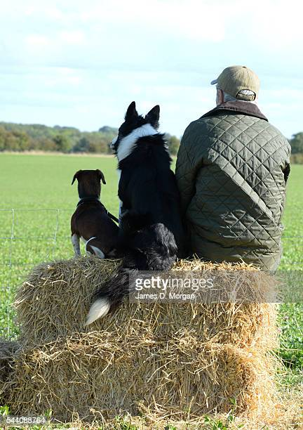 Hosted by the International Sheep Dog Society the English national sheep dog trials on August 18 2014 in Northleach Gloucestershire England