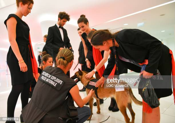 Hostesses pet a sniffer dog patrolling the Festival's Palace with a police officer on May 22 2017 at the 70th edition of the Cannes Film Festival in...