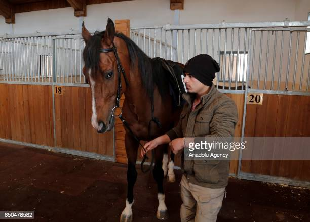 A hostler prepares a horse for the first horse race on international standards in Erbil Iraq on March 9 2017 English and Arabian horses took...