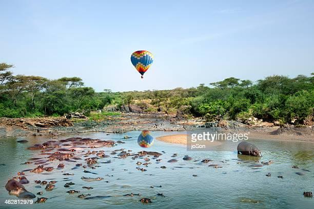 Hot air Balloom over Hippopotamus pool
