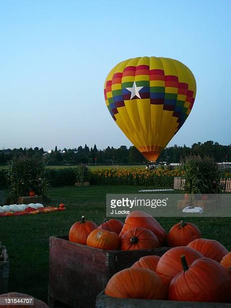 Hot air balloon landing, pumpkins in foreground