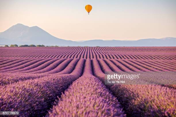 Hot air balloon over lavender field in Provence, France