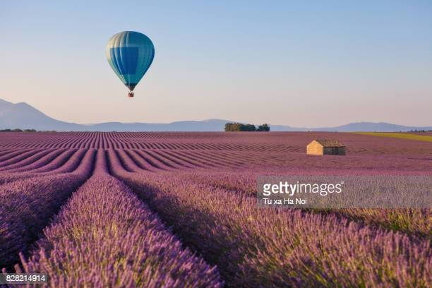 hot air balloon over lavender field in provence, france - hot air balloon stock pictures, royalty-free photos & images