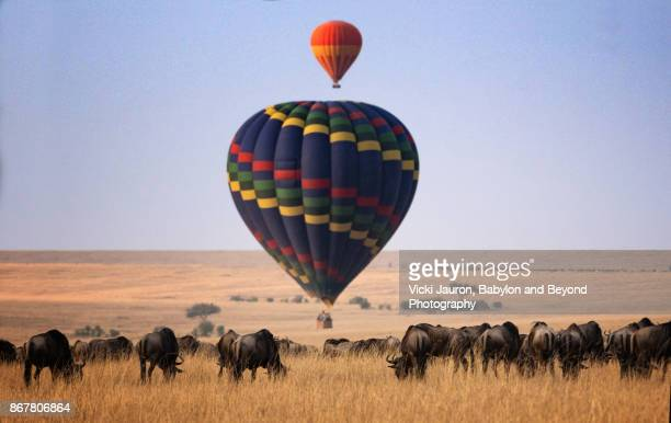 hot air balloons and wildebeest in masai mara, kenya - kenya stock pictures, royalty-free photos & images