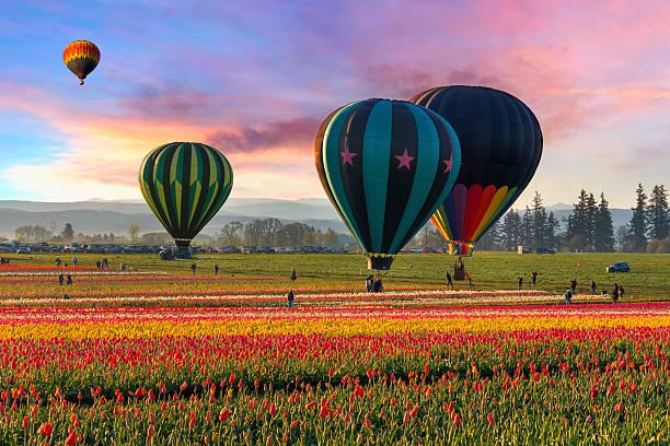 Hot Air Balloons At Sunrise Wall Art