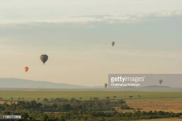 hot air balloons raising from the ground in the plains of masai mara national reserve for an early morning safari ride - south africa stock pictures, royalty-free photos & images