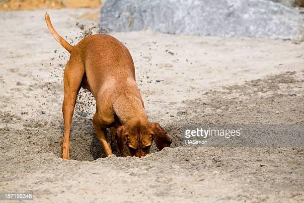 Hot Digitty Digging Dog