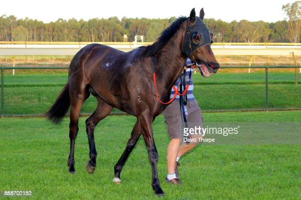 Hot Hansel in the mounting yard after winning the bet365 0 58 Handicap on December 09 2017 in Benalla Australia
