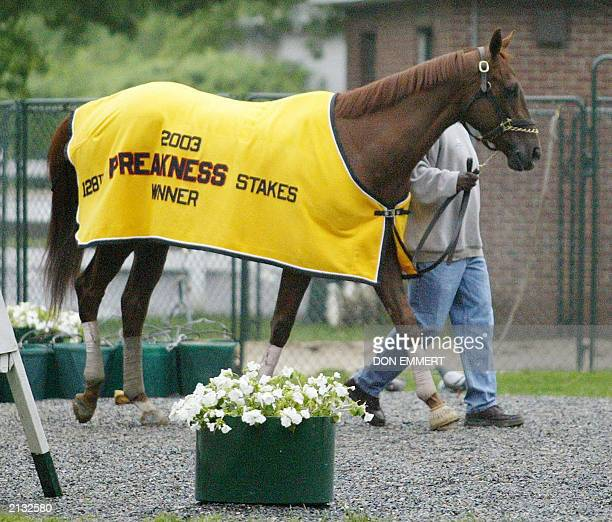Hot walker Raunie Hart walks Funny Cide out of the barn for his bath at Belmont race track in Elmont NY 05 June 2003 Funny Cide is scheduled to run...
