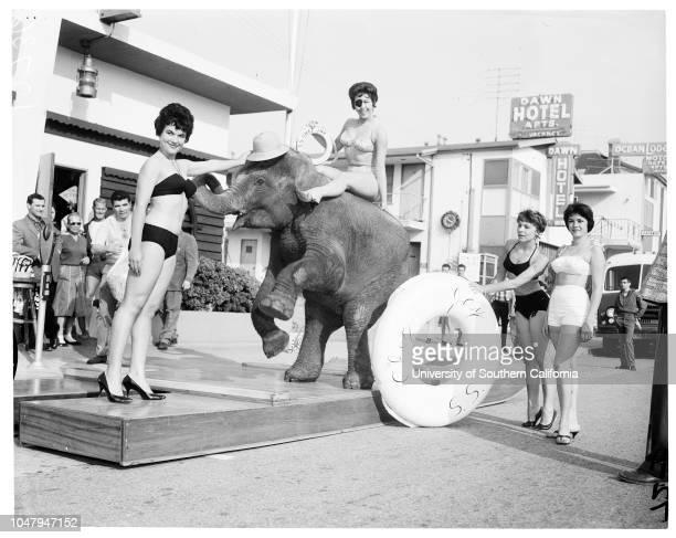 Hot weather pix 30 March 1960 Linda Carroll 22 yearsJoanne Lehigh 23 years Lili Hertel 22 yearsMargo Sheldon 22 years'Pancho' the Elephant...