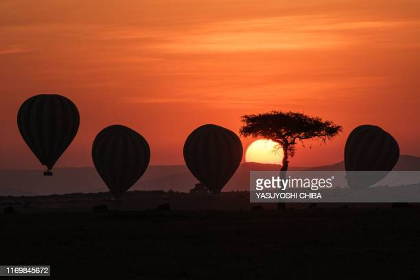 Hot-air balloons fly up with tourists at sunrise in the Masai Mara game reserve in Kenya on September 20, 2019.
