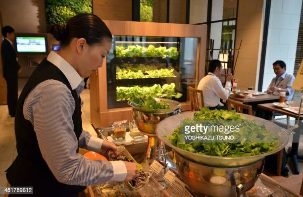 A hotel employee serves green vegetables cultivated in the hydroponic box at a restaurant in the smart city project at Kashiwanoha in Kashiwa city...