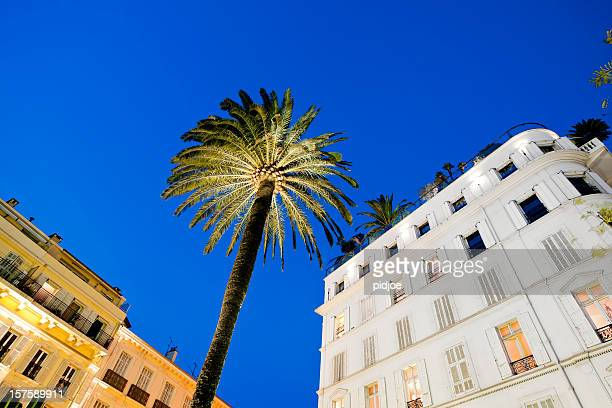 hotel facade and palm tree at sunset in Cannes