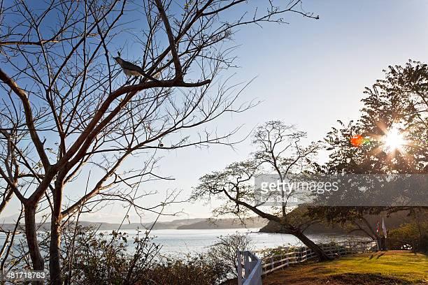 hotel grand papagayo - papagayo guanacaste fotografías e imágenes de stock
