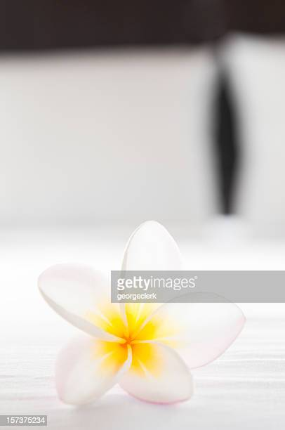 Hotel Room Flower