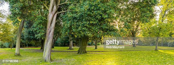 hotham park - parkland stock pictures, royalty-free photos & images