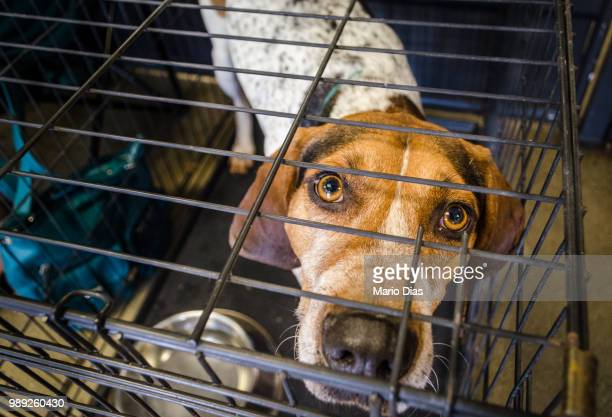 Hounder Behind Bars