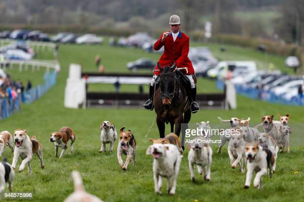 Hounds during the Southdown Eridge point to point meeting on April 15 2018 in Godstone England