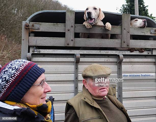 Hounds from the Cleveland Hunt arrive by trailer as the hunt prepares to ride out on the traditional New Year's Day hunt on January 1, 2016 in...