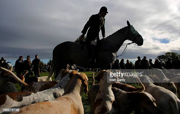 Hounds from the Duke of Beaufort's Hunt gather around the a huntsman at the opening meet of the season at Worcester Lodge on November 2 2013 near...
