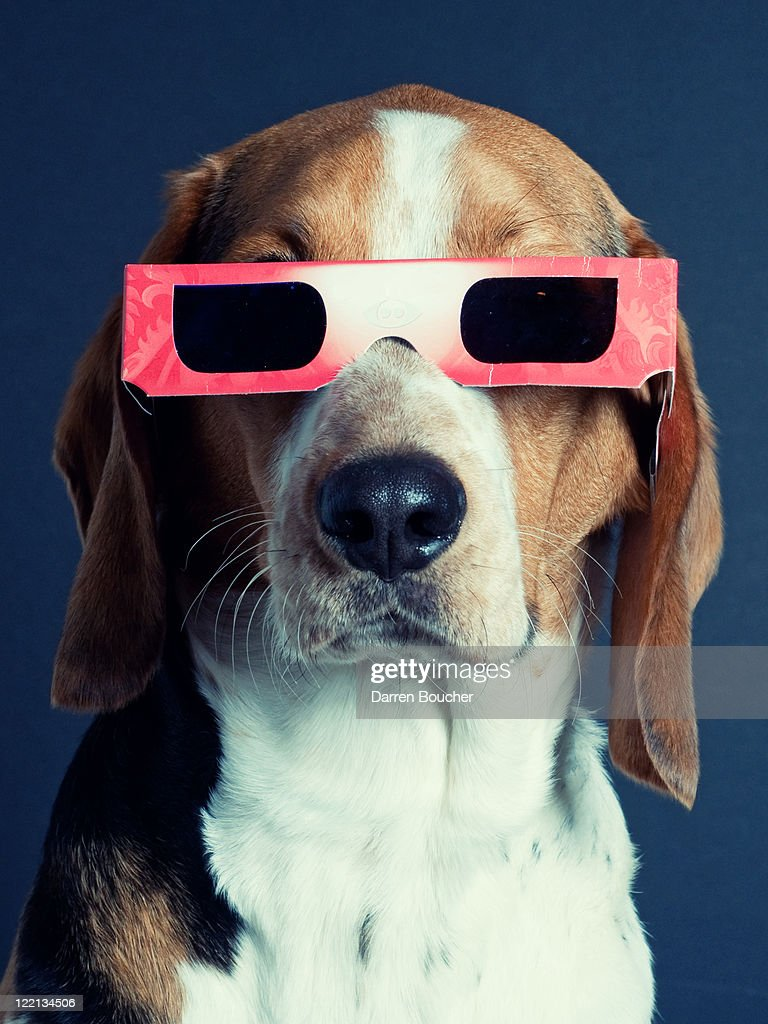 Hounds in 3D : Stock Photo