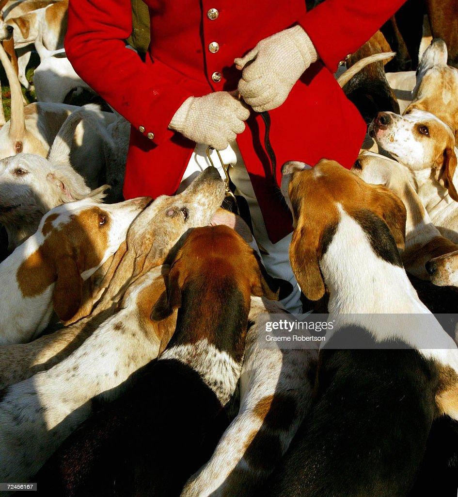 Lov na slikama i videu Hounds-prepare-for-a-fox-hunt-november-1-2003-in-newbury-england-as-picture-id72456167