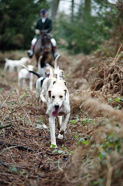 The Beaufort Hunt, Gloucestershire