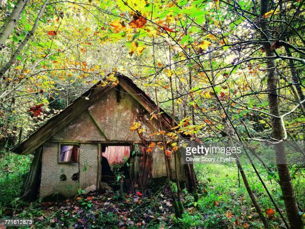 House Amidst Trees During Autumn