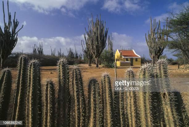 House amongst cacti, Washington Slagbaai National Park, Bonaire.