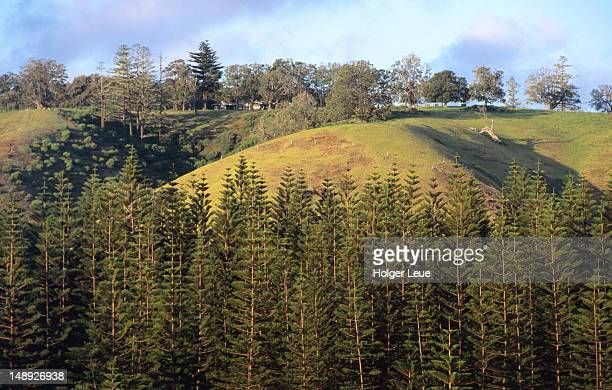 House and Norfolk Island pines.