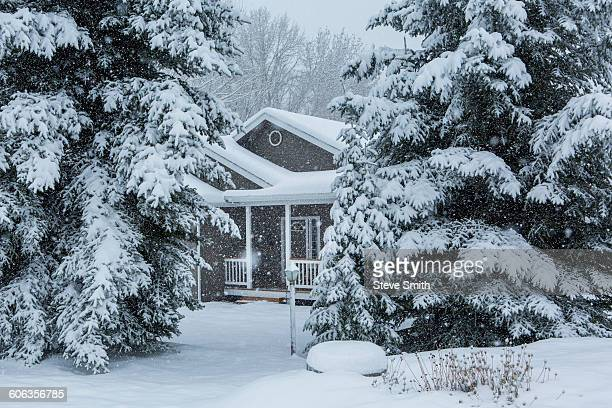 House and trees in snowy front yard