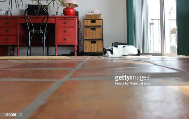 House cat in the distance lying on floor near window