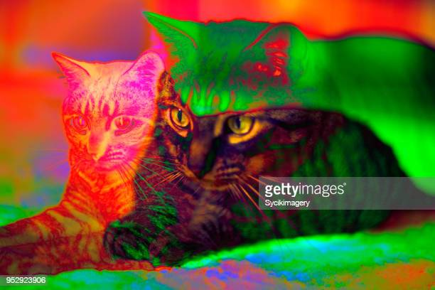 house cat - trippy stock pictures, royalty-free photos & images