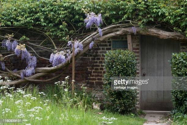 A house covered by ancient wisteria branches close to Richmond Park Richmond England Artist Ethel Davies