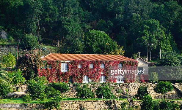 house covered with red ivy in autumn. - douro valley stock photos and pictures