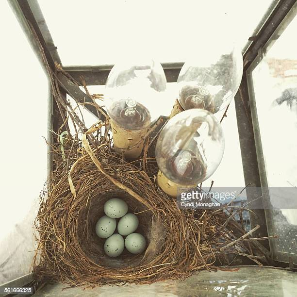 house finch nest - house finch stock pictures, royalty-free photos & images