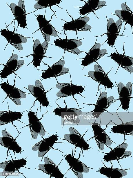 house fly background - housefly stock pictures, royalty-free photos & images