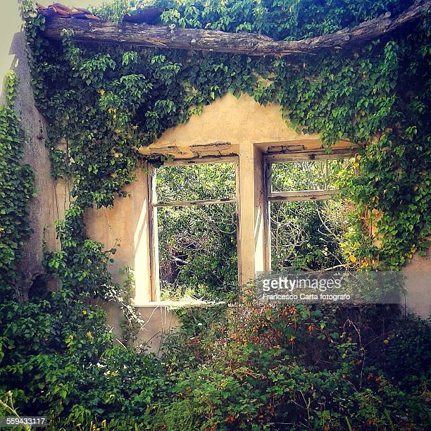 house in ruins - poison oak stock pictures, royalty-free photos & images
