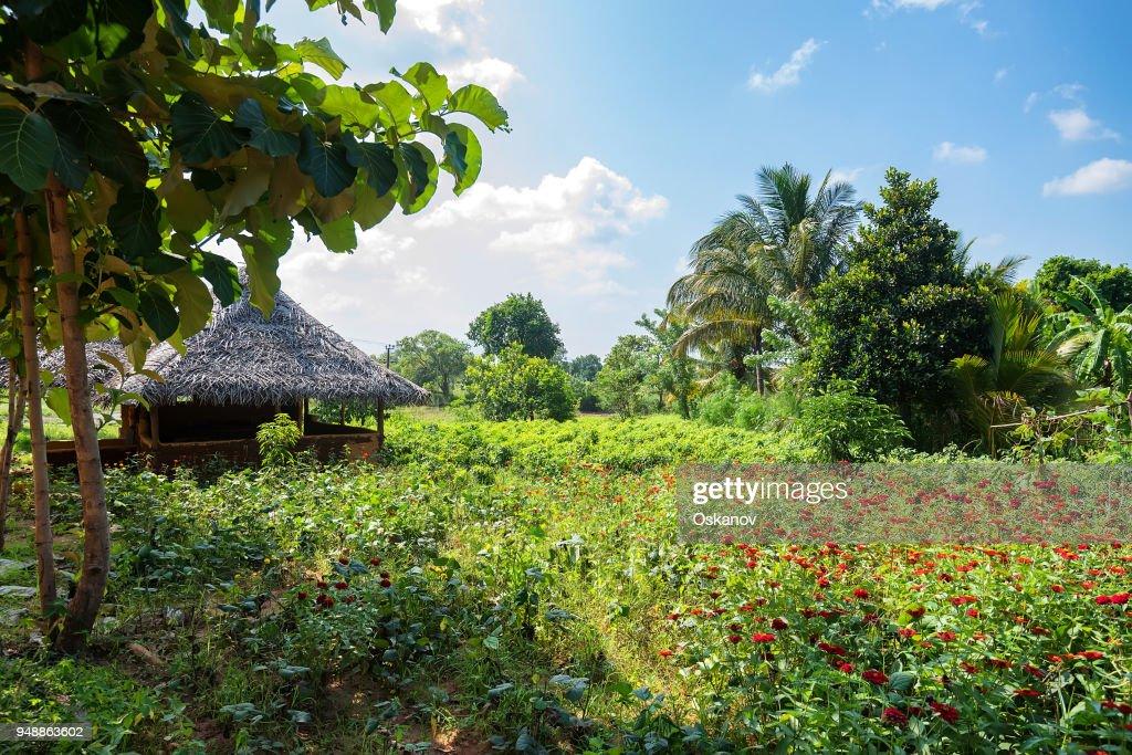 House in village in Sri Lanka : Stock Photo