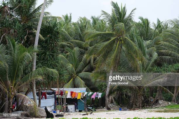 A house nestled under palm trees at the north end of the mainland on August 15 2018 in Funafuti Tuvalu The small South Pacific island nation of...