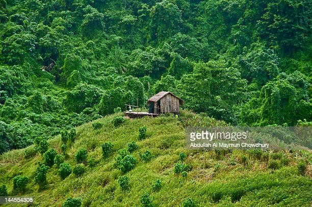 house on kaptai - bangladesh nature stock photos and pictures