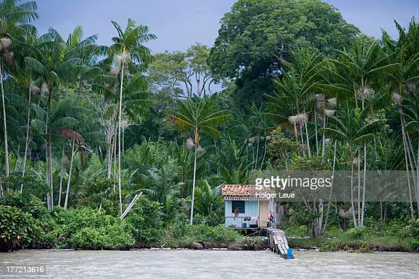 House on stilts and tropical Amazon rainforest
