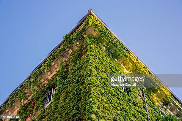 House overgrown with ivy, Rome, Italy