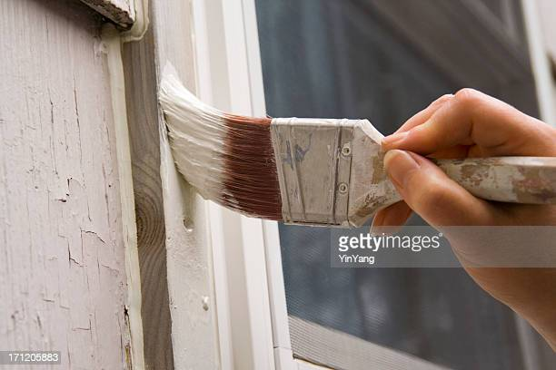 House Painter Painting, Repairing a Residential Structure for Home Improvement