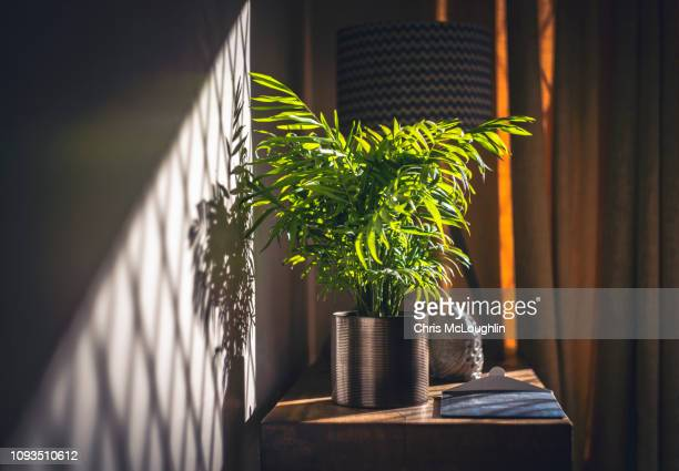 house plant and sunshine - light beam stock pictures, royalty-free photos & images