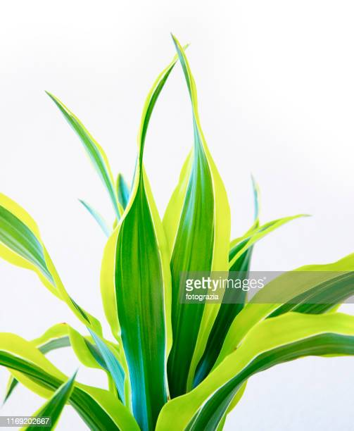 house plant - long stem flowers stock pictures, royalty-free photos & images