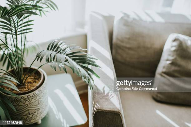 house plant - sun stock pictures, royalty-free photos & images
