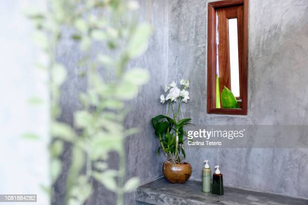 house plants in a modern concrete bathroom - toilet planter stock pictures, royalty-free photos & images