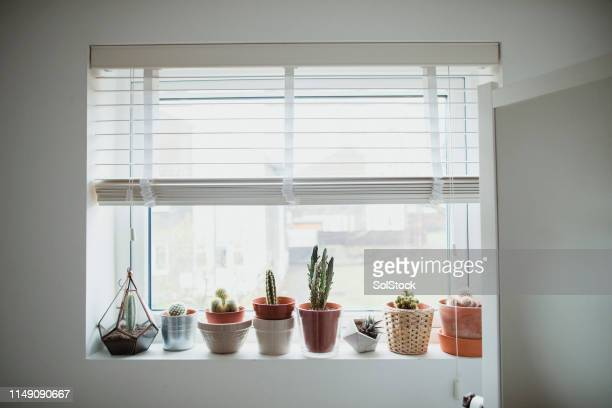 house plants - collection stock pictures, royalty-free photos & images