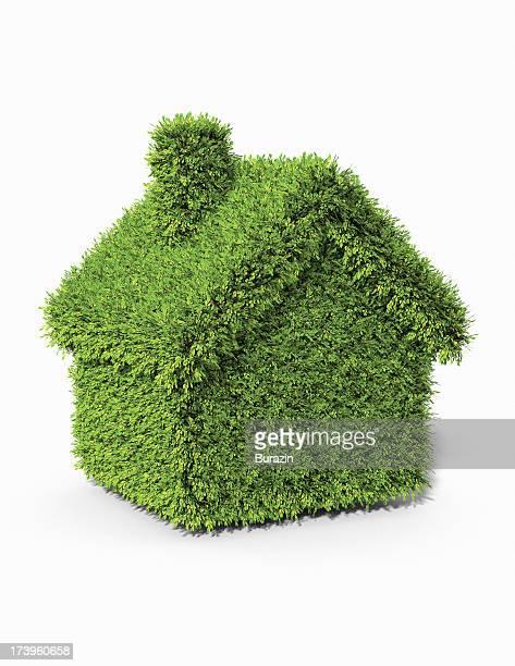 House shaped boxwood  topiary